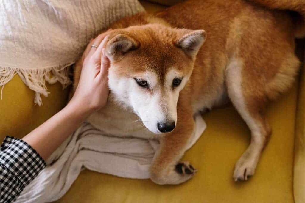 איך לבחון אופי של כלב