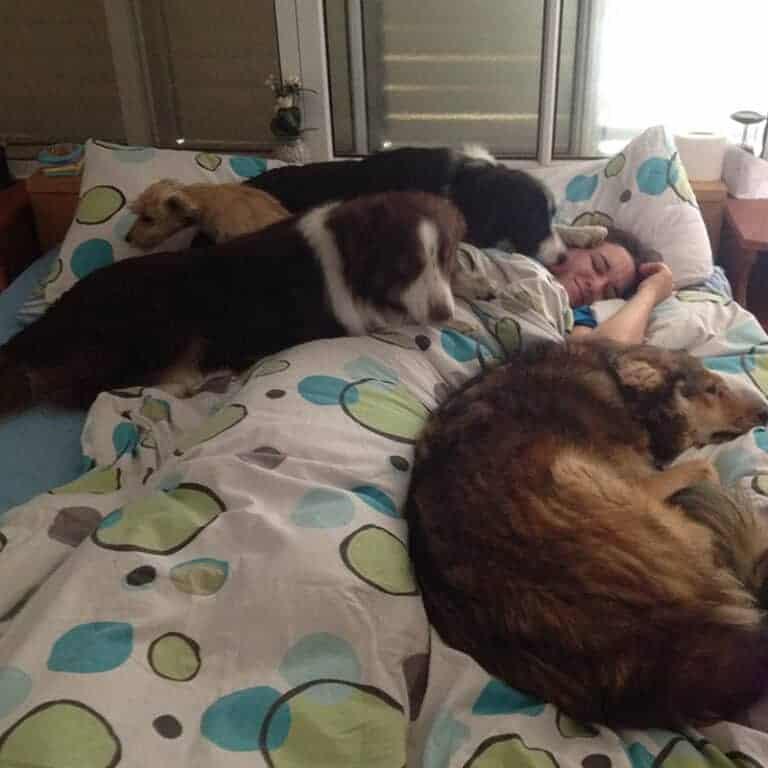 כלבים על המיטה