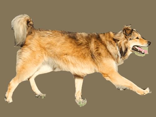אילוף כלבים הומני