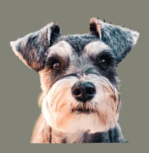 ייעוץ בבחירת כלב